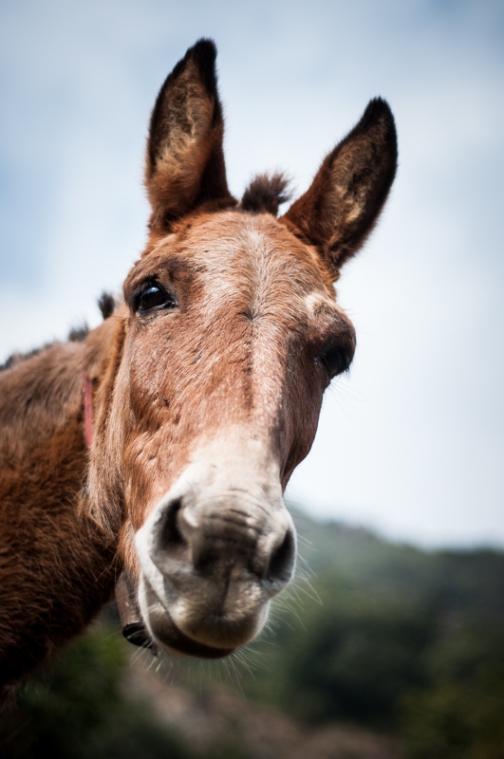 Day 19 - Mule