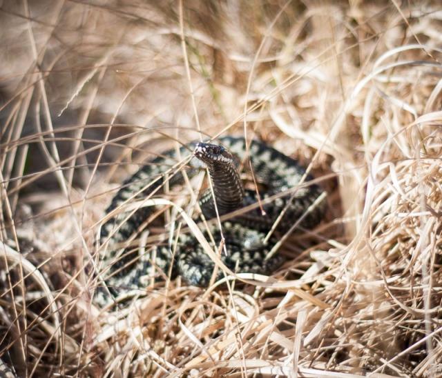 10-Snake
